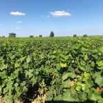 boisrouge-philippe-Delacourcelle-les Vignes